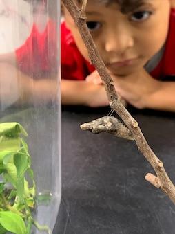 As crianças asiáticas estão sentados olhando para lagartas penduradas nos galhos