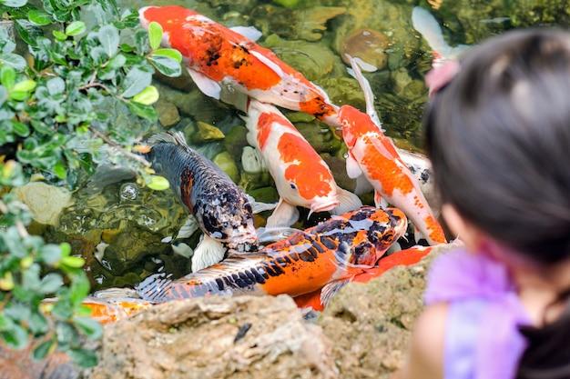 As crianças estão assistindo koi peixe perto da superfície da água na lagoa