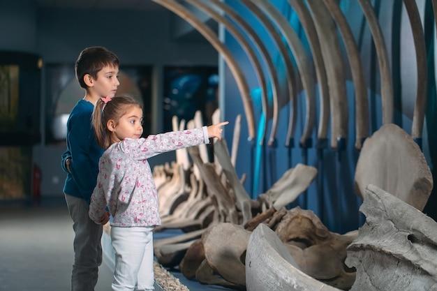 As crianças olham para o esqueleto de uma baleia ancestral no museu de paleontologia.