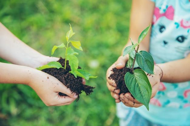 As crianças plantam plantas juntas nas mãos.