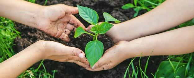 As crianças plantam plantas no jardim.