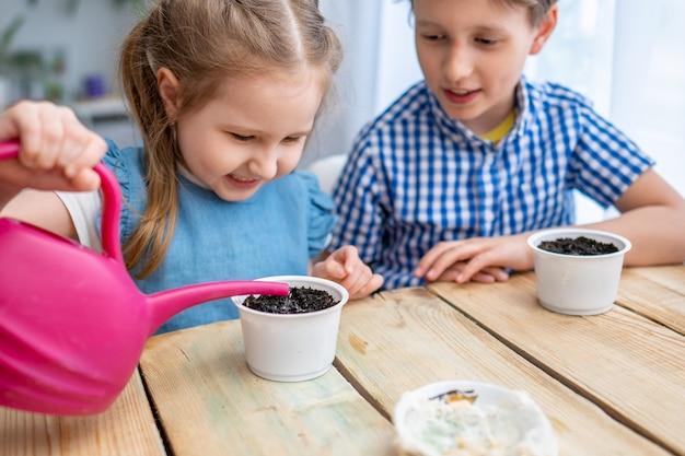As crianças plantam sementes de abóbora em vasos com a terra e as regam.