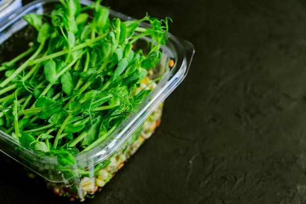 As ervilhas brotam plantas comestíveis em uma caixa plástica. microgreens nutrição.