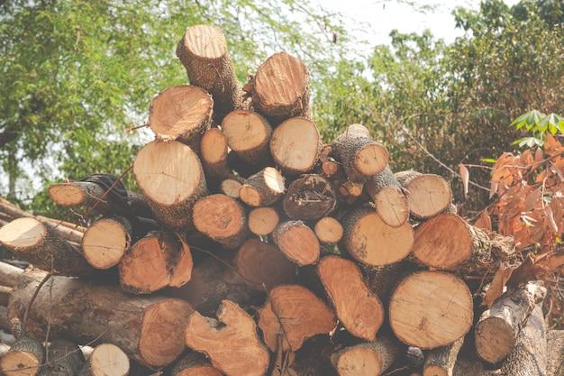 As estacas de madeira acabadas no jardim.