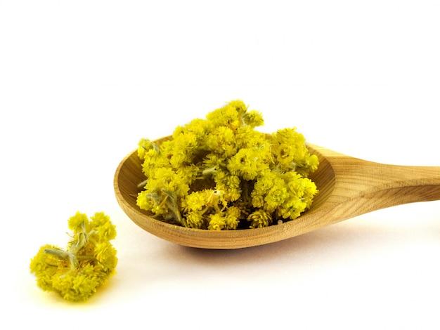 As flores amarelas secas do celandine encontram-se em uma colher de pau em um branco