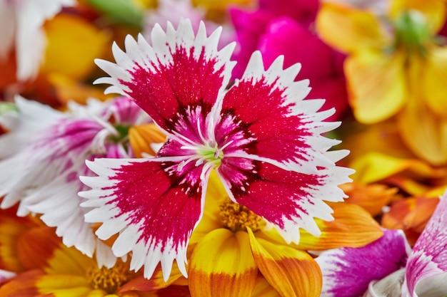 As flores comestíveis têm uma grande variedade de cores e sabores