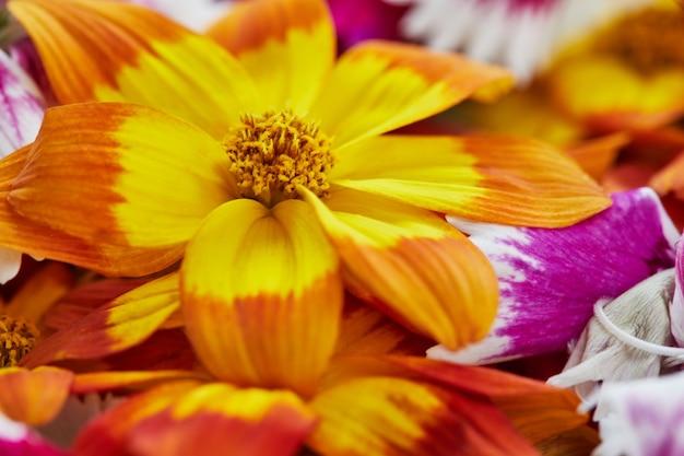 As flores comestíveis têm uma grande variedade de cores e sabores.