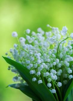 As flores de lilly do vale fecham-se sobre fundo verde bokeh com espaço de cópia