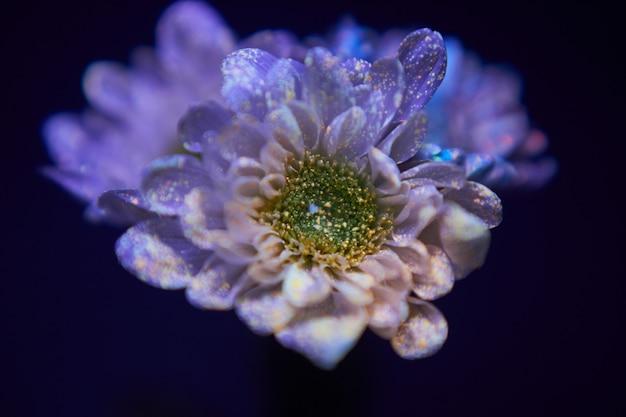 As flores nas gotas de tinta brilham na luz ultravioleta