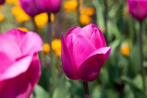 As flores são cultivadas para o paisagismo
