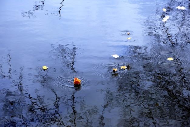As folhas amarelas caindo na água