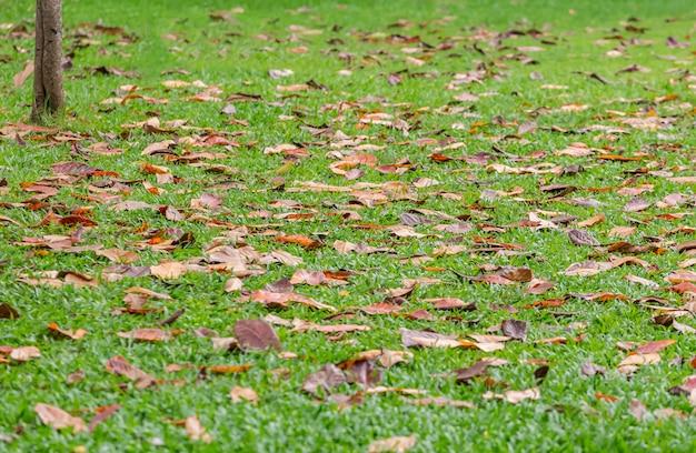 As folhas caem no gramado