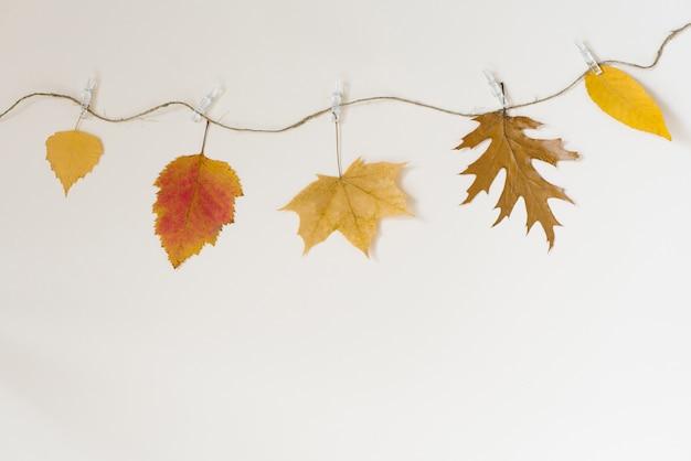 As folhas caídas do outono penduram em uma corda com prendedores de roupa em um fundo bege claro