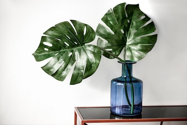 As folhas da planta monstera verde ficam na mesa em um grande frasco de vidro azul