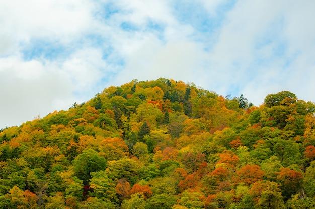 As folhas de outono coloridas mudam de cor para vermelho no japão.