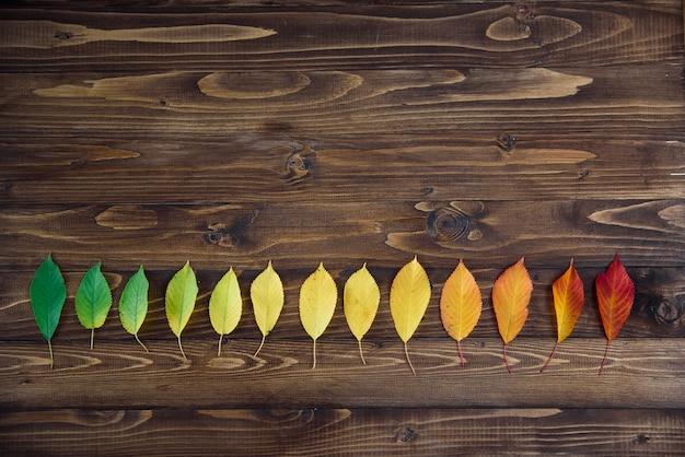 As folhas de outono dispostas em uma tira passam de verde para vermelho em um fundo de madeira. o conceito de mudar a estação.