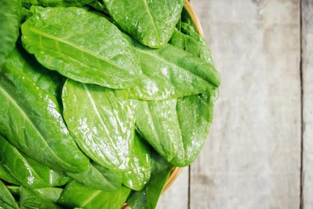 As folhas de verduras, azeda e espinafre. foco seletivo.