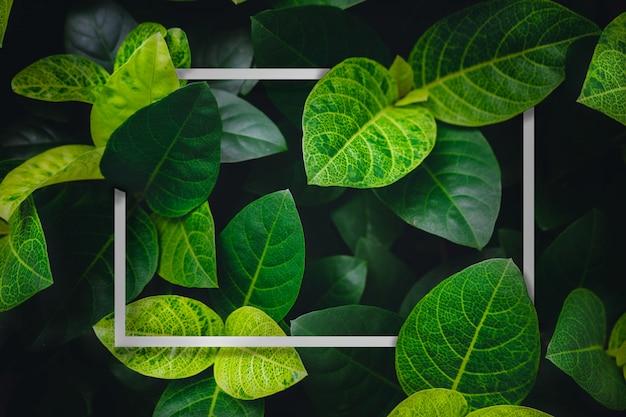 As folhas do verde do verde do fundo da samambaia saem do conceito da mola da natureza.