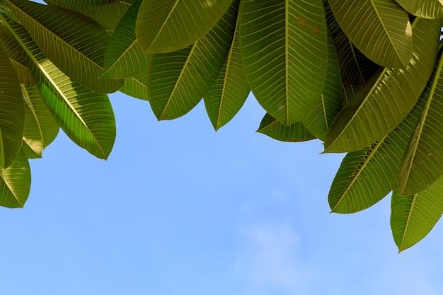 As folhas estão empilhadas em primeiro plano e o céu está em segundo plano