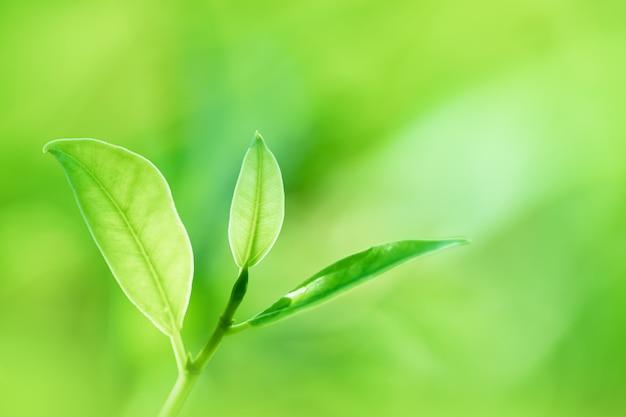 As folhas fecham a natureza vista de folhas verdes sobre fundo desfocado vegetação no jardim