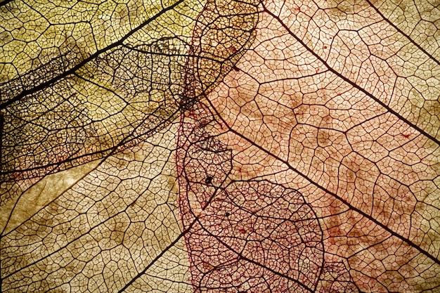 As folhas fecham o fundo. seque em folhas velhas com um micro padrão em um fundo claro e decorativo