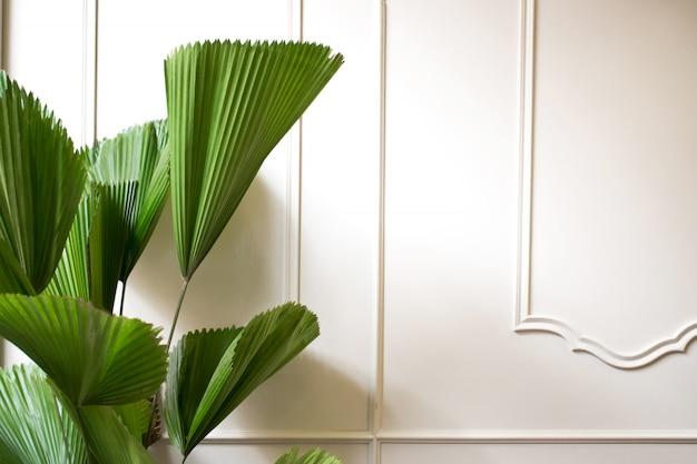 As folhas na parede moderna branca