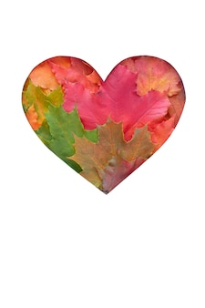 As folhas são em forma de coração em branco