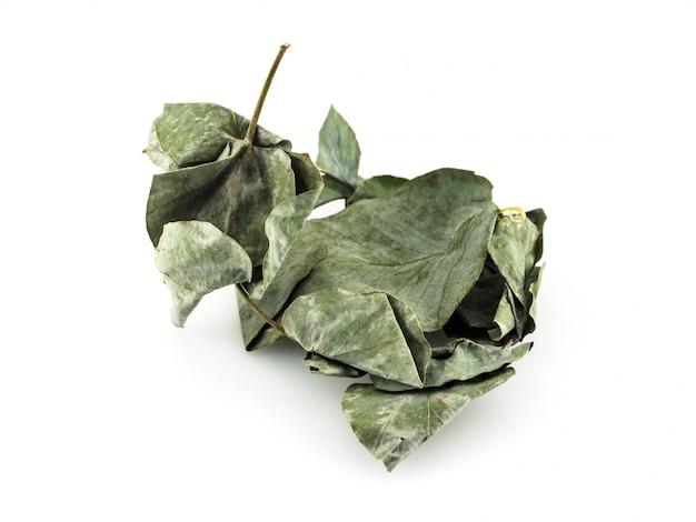 As folhas secas do eucalipto são prateadas