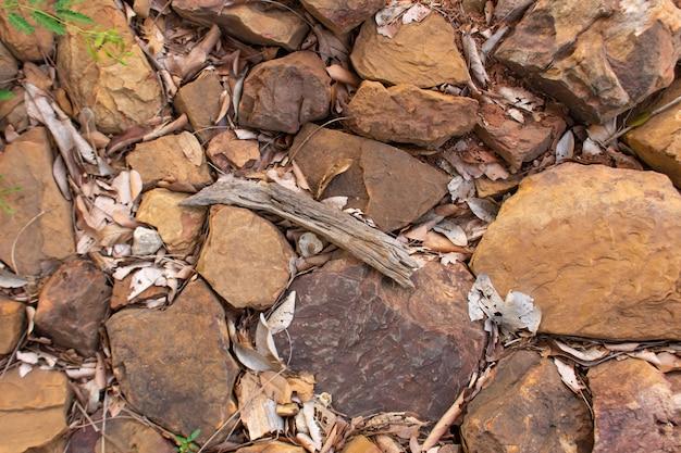 As folhas secas e galhos nas pedras