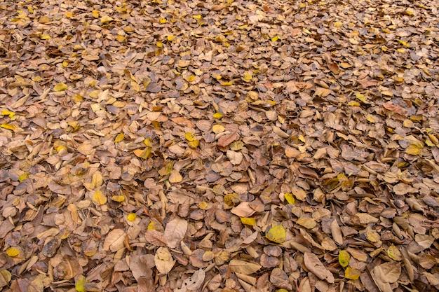 As folhas secas marrons e amarelas naturais bonitas deixam cair na estação do outono.