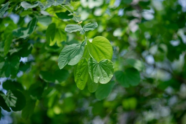 As folhas verdes estão na área verde na estação das chuvas. conceitos naturais abundantes