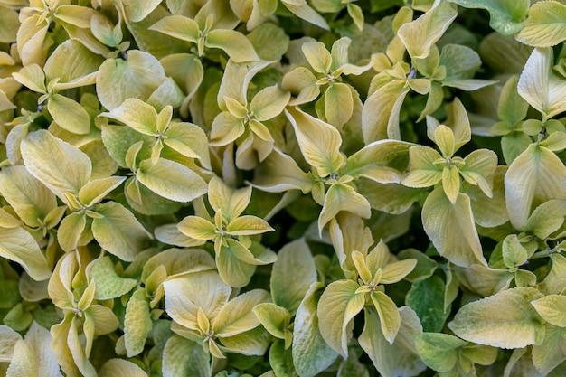 As folhas verdes macias fecham-se acima do fundo. natureza padrão ninguém