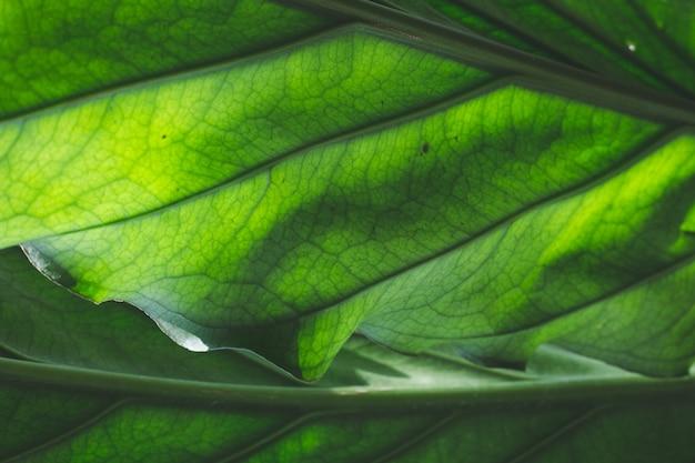 As folhas verdes