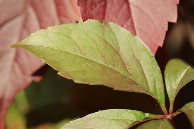As folhas vermelhas amarelas do outono fecham-se acima