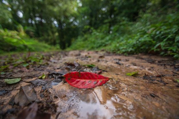 As folhas vermelhas que caem na floresta verde ficam embaçadas.