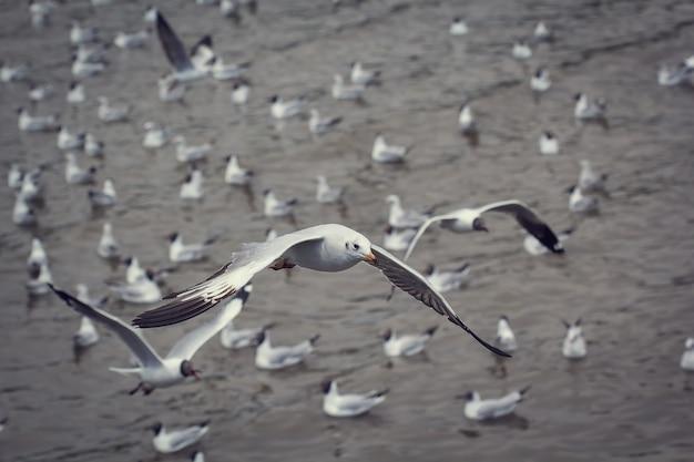 As gaivotas migratórias migram para o litoral de bang pu, na tailândia, durante novembro e abril.