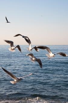 As gaivotas voam sobre o mar ao amanhecer. pássaros brancos no fundo do mar e do céu. o conceito de liberdade