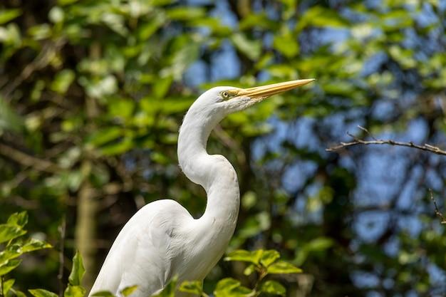 As garças são aves de água doce e costeiras de patas compridas da família ardeidae, com 64 espécies reconhecidas.