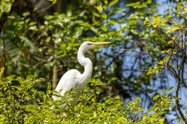 As garças são aves de água doce e costeiras de patas compridas da família ardeidae, com 64 espécies reconhecidas