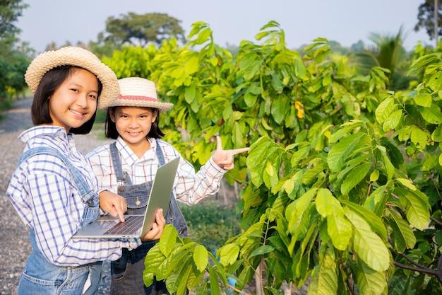 As jovens consultaram e planejaram o plantio de sentol amarelo e usando um laptop computadorizado no campo de arroz. o agricultor é uma profissão que requer paciência e diligência. ser agricultor