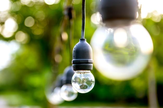 As lâmpadas são penduradas em longas filas natureza de fundo da árvore verde linda de manhã