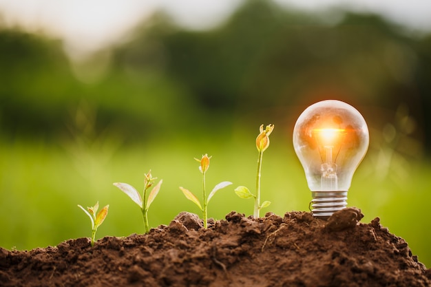 As lâmpadas transmitem o conceito de crescimento de energia limpa e crescimento de negócios. start up business concept, csr concept