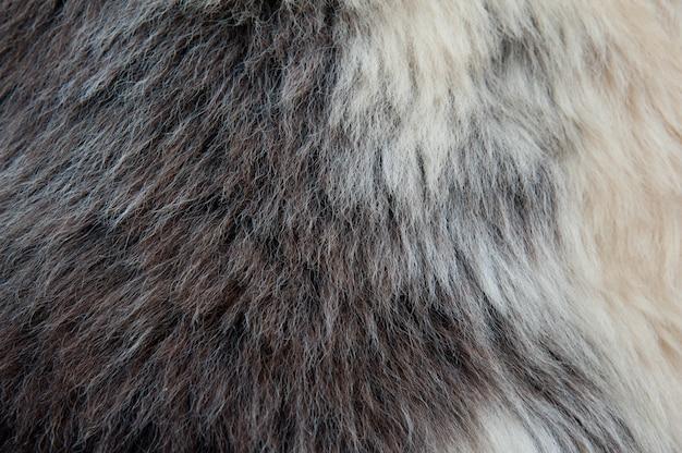 As lãs macias brancas e marrons texture o fundo do fundo. pêlo fofo.