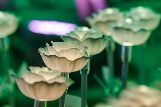 As luzes são decoradas como flores para criar uma bela luz durante a noite no festival.