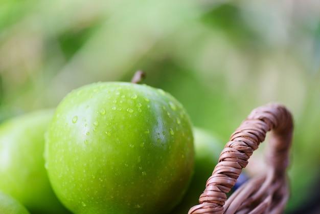As maçãs verdes frescas colhem a maçã na cesta no verde da natureza da fruta do jardim