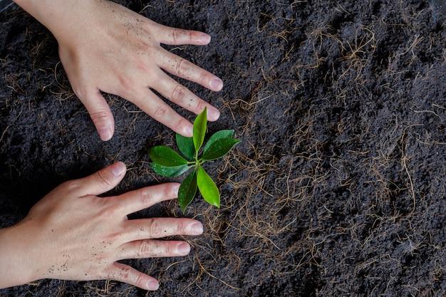 As mãos crescem pequena árvore.