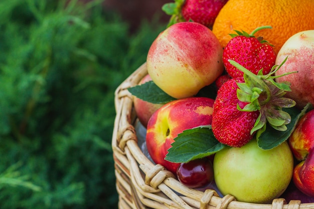 As mãos da menina seguram nectarinas, laranjas, morangos, cerejas e folhas de hortelã, que estão em uma cesta de vime.