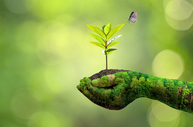 As mãos da natureza segurando uma planta no solo com uma borboleta e um fundo de vegetação desfocado
