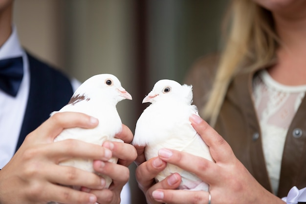As mãos da noiva e do noivo seguram pombas brancas de casamento.