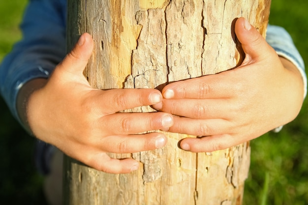 As mãos das crianças seguram um toco no parque na natureza